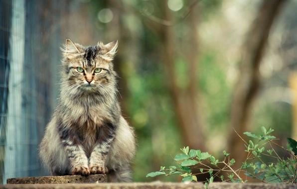 Картинка кот, серый, сидит, смотрит, кустарник