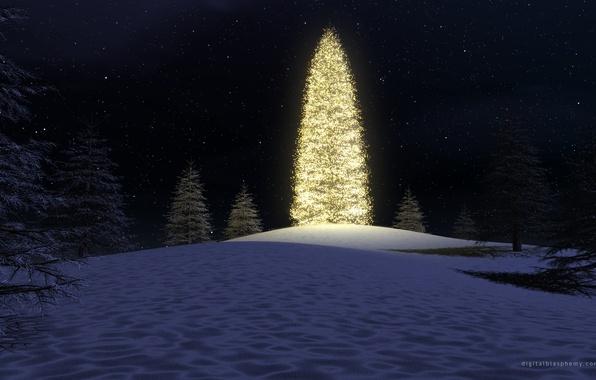 Картинка лес, ночь, огни, елка