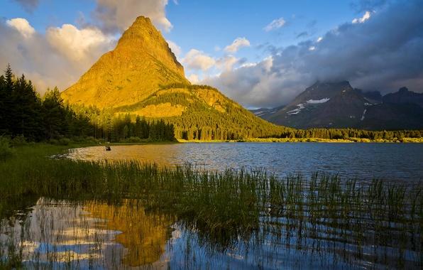 Картинка лес, трава, солнце, облака, деревья, горы, озеро, камыши, скалы, США, Glacier National Park, Montana