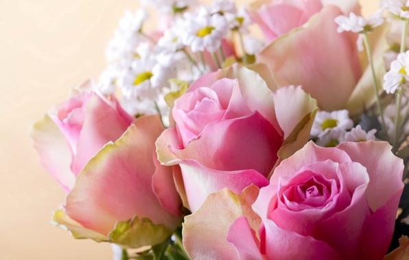 Картинка фон, розы, ромашки, розовые