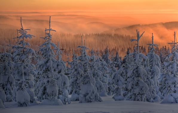 Картинка зима, лес, снег, закат, туман, елки, ели, сумерки