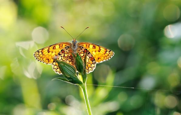 Картинка зелень, макро, блики, бабочка, крылья, размытость