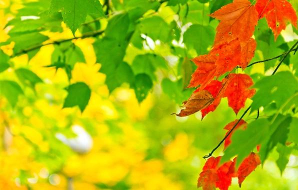 Картинка осень, листья, свет, природа, краски, colors, light, nature, autumn, leaves, боке, bokeh, 2560x1600
