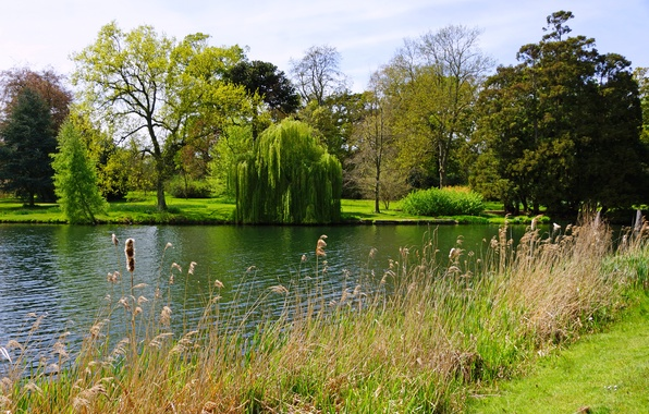 Картинка лето, трава, деревья, озеро, парк, Англия, кусты, Peterboro