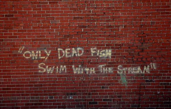 Картинка стена, надпись, фраза