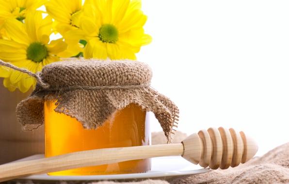 Картинка цветы, мед, банка, хризантемы