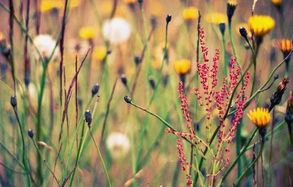 Картинка лето, цветы, природа, фон, обои, поляна, картинки, растения, травы, wallpapers