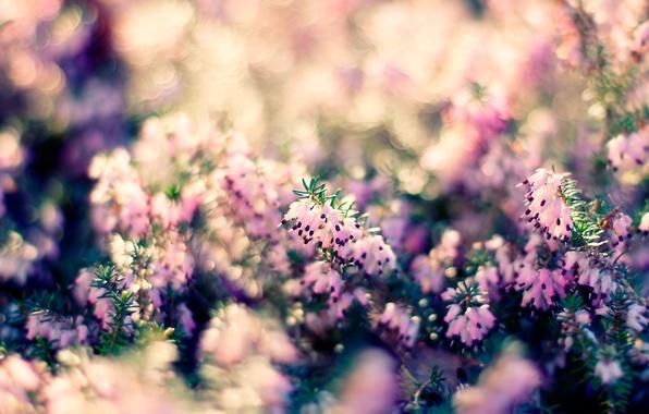 Картинка макро, свет, природа, растение, боке