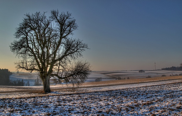 Картинка зима, дорога, поле, снег, природа, фото, дерево