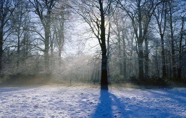 Обои картинки фото зима, снег, деревья, свет