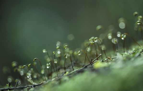 Картинка капли, макро, жизнь, ростки, роса