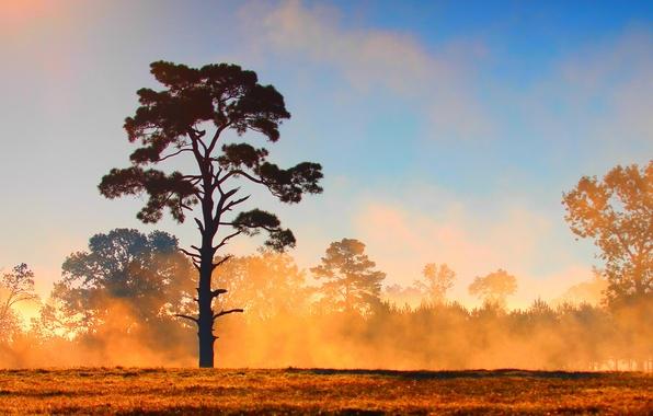 Картинка поле, лес, небо, облака, туман, дерево