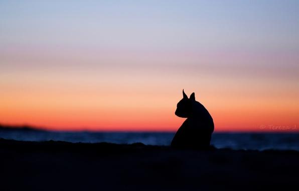 Картинка кошка, небо, кошки, закат, природа, фон, widescreen, обои, настроения, силуэт, wallpaper, ушки, широкоформатные, background, полноэкранные, …