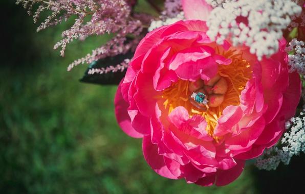 Картинка цветок, камень, лепестки, кольцо