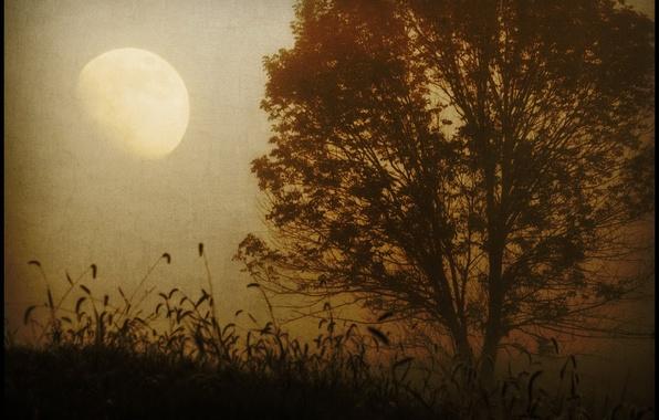 Картинка туман, дерево, Сепия