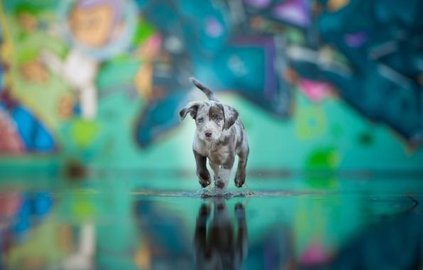 Картинка вода, друг, собака, щенок, окрас