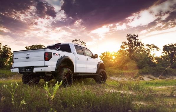 Картинка белый, небо, трава, солнце, деревья, тюнинг, Ford, Форд, джип, внедорожник, вид сзади, пикап, tuning, F-150, …