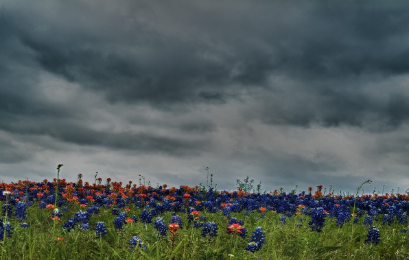 Картинка небо, цвета, облака, цветы, природа, поля, HDR, colors, hdr, красивая, flower, sky, field, nature, хорошо, …