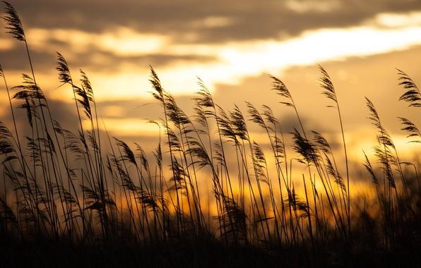 Картинка трава, восход, боке