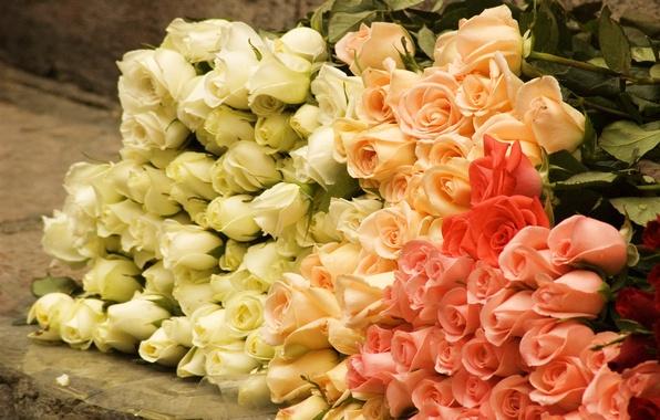 Картинка цветы, розы, букет, rose, бутоны