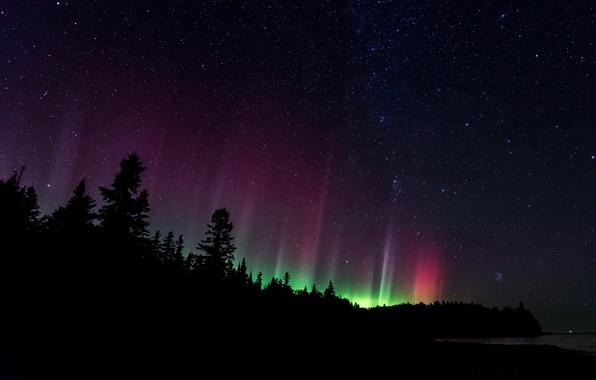 Картинка лес, небо, звезды, ночь, северное сияние, силуэт, север