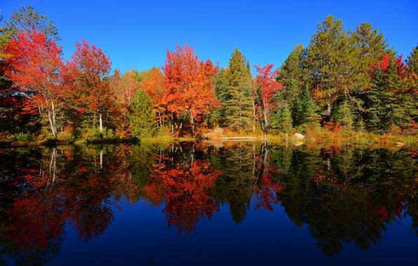 Картинка осень, лес, небо, деревья, пруд, отражение