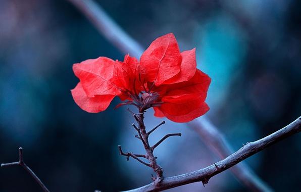 Картинка листья, макро, природа, ветка, красные