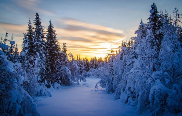 Картинка зима, лес, снег, елки, утро
