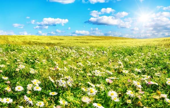 Картинка поле, лето, небо, трава, солнце, облака, цветы, ромашки