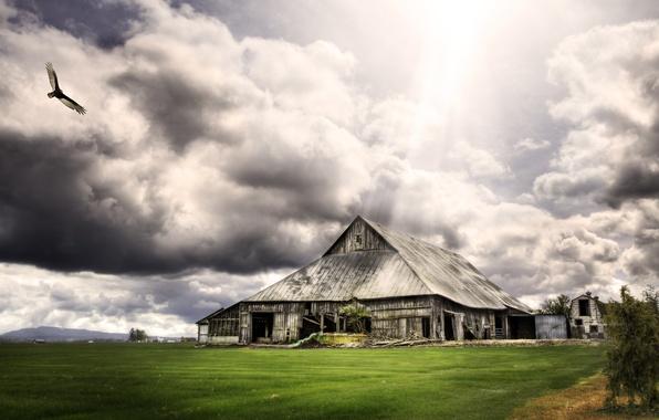 Картинка трава, облака, птица, сарай