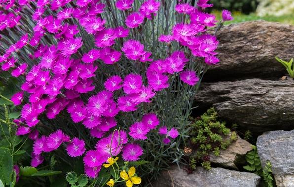 Картинка парк, камни, лепестки, сад