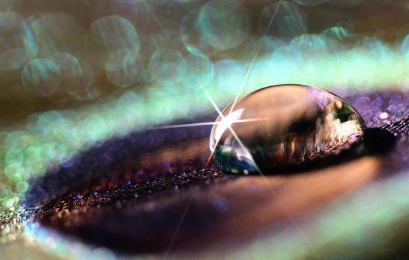 Картинка фиолетовый, вода, капли, макро, роса, фон, перо, widescreen, обои, блеск, капля, wallpaper, широкоформатные, background, боке, …