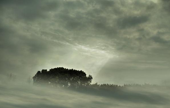 Картинка лес, деревья, природа, туман, пейзажи, вид, forest, fog, небо trees