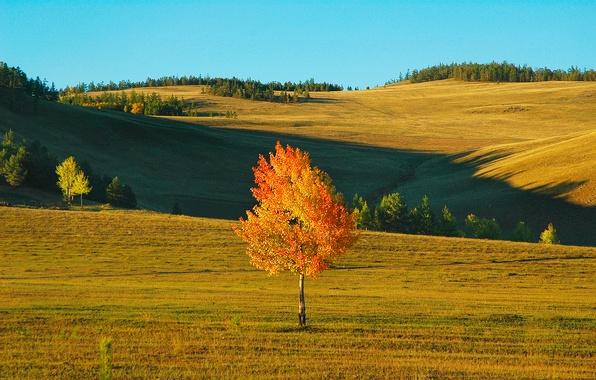 Картинка поле, осень, небо, пейзаж, дерево, ветер, холмы, березка
