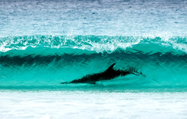 Картинка sea, nature, water, shore, dolphin, Cape, Surfing, Le Grand NP, breathtaking sight, wave turquoise color
