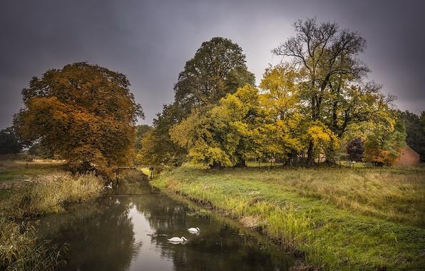 Картинка осень, канал, лебеди
