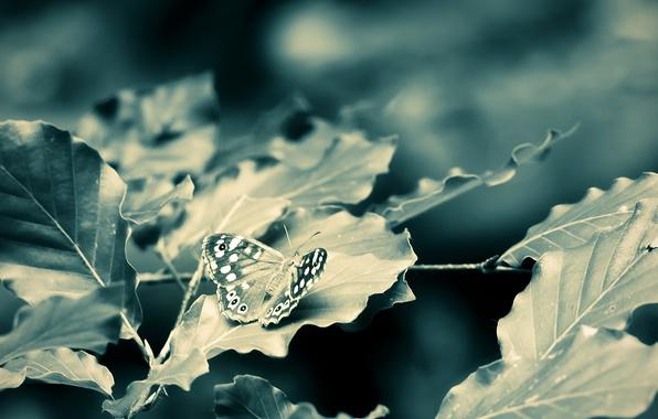 Картинка листья, макро, ветки, бабочка