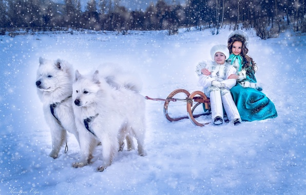 Картинка зима, собаки, снег, дети, мальчик, девочка, сани, барышня, самоеды