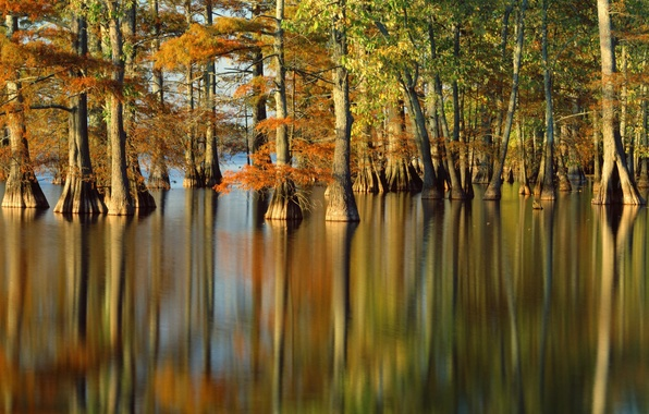 Картинка осень, вода, деревья, природа, река, фото