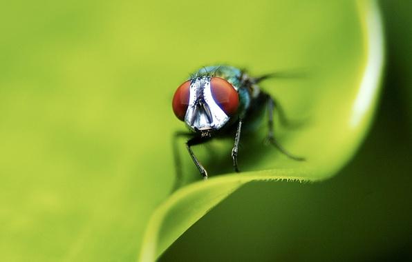 Картинка лист, зеленый, муха