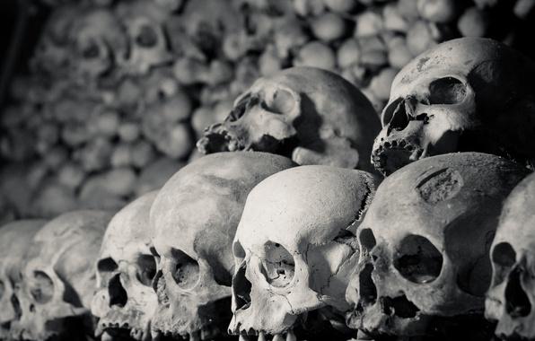 Фото обои stacked, bones, skull