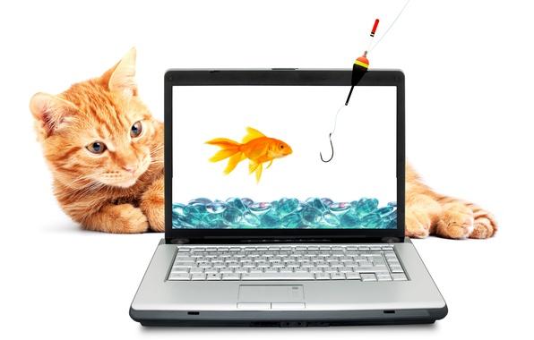Картинка кот, вода, рыжий, золотая рыбка, ноутбук, удочка, крючок