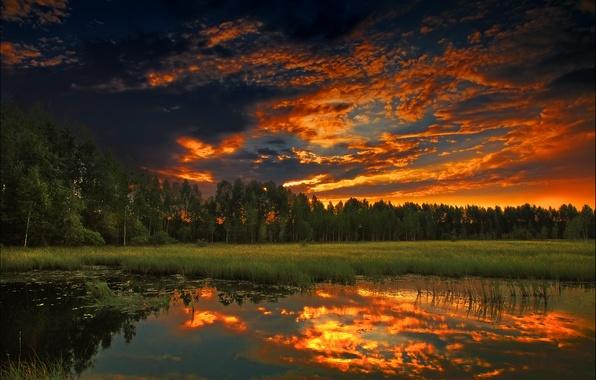 Картинка лес, лето, закат, природа, вечер