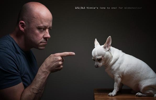 Картинка человек, ситуация, собака
