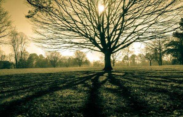 Картинка поле, свет, природа, дерево
