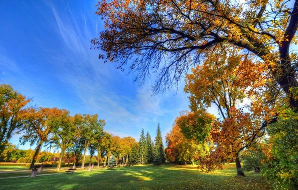 Картинка осень, небо, трава, деревья, парк, дорожка, скамья
