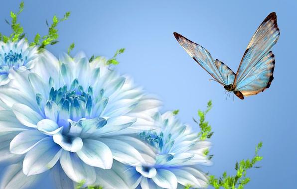 Картинка цветы, коллаж, бабочка, лепестки