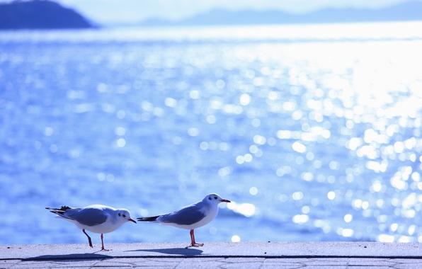 Чайки птицы море вода волны блики
