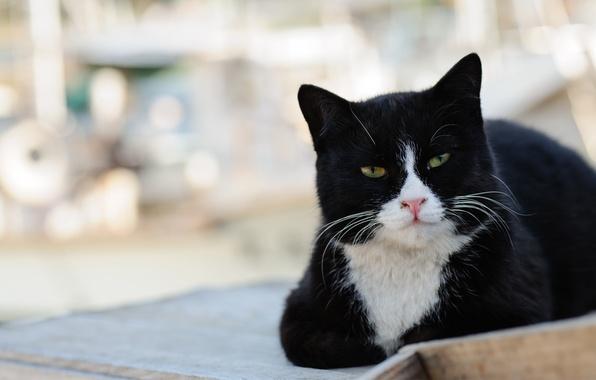 Картинка кот, морда, черно-белый, улица, лежит, котэ