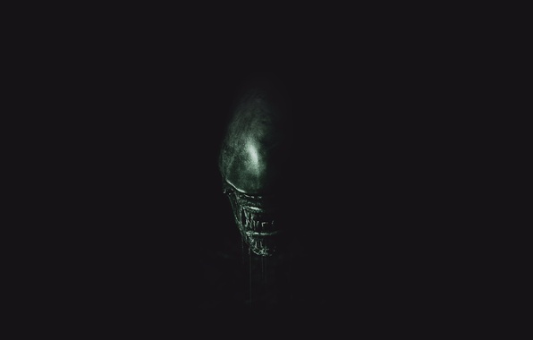 Картинка green, wallpaper, horror, black, exoskeleton, monster, alien, Alien, science fiction, predator, sci-fi, movie, fang, killer, …
